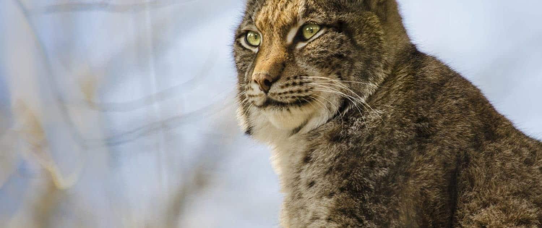 Lux Jagd Österreich