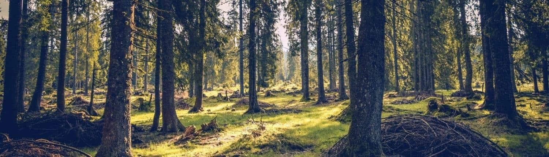 SEO Trends 2018 - Bäume & Wald